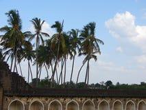Árboles de coco que agitan en viento Imágenes de archivo libres de regalías