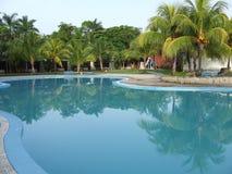 Árboles de coco reflejados en el agua de la piscina Imagen de archivo