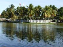 Árboles de coco reflejados en un agua Imágenes de archivo libres de regalías