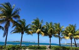 Árboles de coco soleados de Bahamas Imágenes de archivo libres de regalías