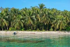 Árboles de coco tropicales enormes de la playa America Central imagen de archivo