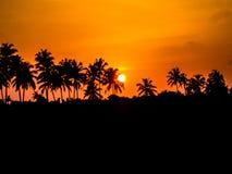 Árboles de coco y el sol poniente Foto de archivo