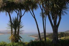Árboles de col de Nueva Zelanda con Opononi, puerto de Hokianga en el fondo fotos de archivo libres de regalías