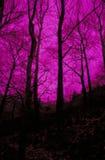 Árboles de color de malva Foto de archivo libre de regalías