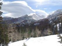 Árboles de Colorado y picos alpinos imagen de archivo