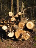 Árboles de Cutted para el retiro para la leña fotos de archivo