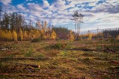 Árboles de Cutted que mienten en la madera no en orden en el bosque alegre imagen de archivo libre de regalías