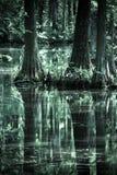 Árboles de Cypress en el lago y Iris Gardens swan Fotos de archivo