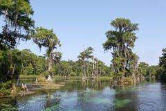 Árboles de Cypress en el río Imagen de archivo libre de regalías