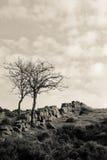 Árboles de Dartmoor Imagen de archivo libre de regalías