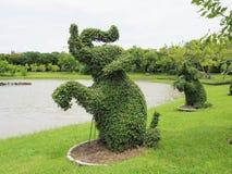 Árboles de elefante un pequeño árbol de la hoja puede forzar a cualquier forma, mismo po Foto de archivo