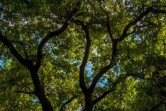 Árboles de Estambul Imágenes de archivo libres de regalías