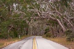Árboles de eucalipto foto de archivo libre de regalías