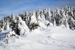 Árboles de Frosen en montañas cárpatas Fotos de archivo libres de regalías