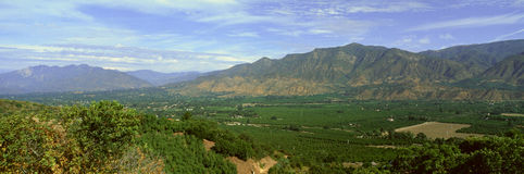 Árboles de fruta cítrica, valle de Ojai, California Imagen de archivo
