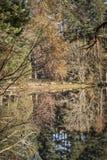 Árboles de Garten del lago en colores del otoño en Escocia Fotos de archivo