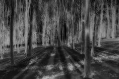 Árboles de haya en invierno Fotos de archivo