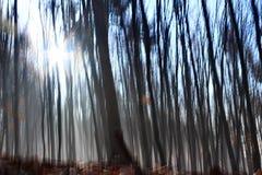 Árboles de haya en invierno Foto de archivo