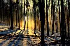 Árboles de haya en invierno Imagen de archivo libre de regalías