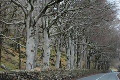 Árboles de haya en invierno Imagenes de archivo