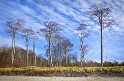 Árboles de haya en la playa Fotos de archivo libres de regalías