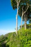 Árboles de haya en la sol Fotografía de archivo libre de regalías