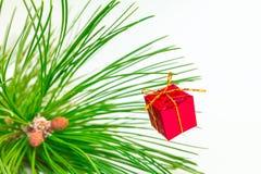 Árboles de hoja perenne Imágenes de archivo libres de regalías