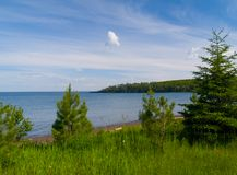 Árboles de hoja perenne de la bahía de la inundación Foto de archivo