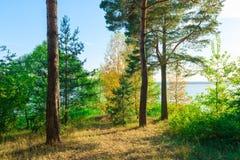 Árboles de hoja perenne en la orilla del lago Fotos de archivo