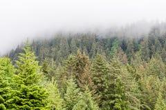 Árboles de hoja perenne en Misty Alaskan Mountains Imagen de archivo libre de regalías
