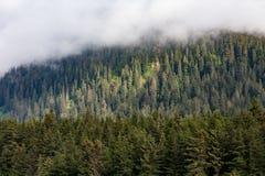 Árboles de hoja perenne en Misty Mountain Fotos de archivo libres de regalías