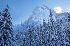 Árboles de hoja perenne Forest Snow Mountain Snoqualme Pass Washington Nevado Fotos de archivo libres de regalías
