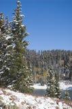 Árboles de hoja perenne Nevado por el depósito de Ward Creek Fotografía de archivo