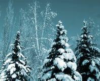 Árboles de hoja perenne nevados Foto de archivo