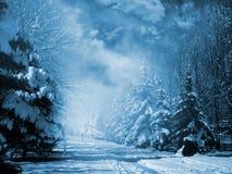 Árboles de hoja perenne nevados Fotos de archivo