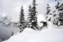 Árboles de hoja perenne nevados Fotografía de archivo libre de regalías