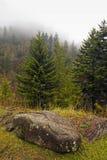 Árboles de hoja perenne, otoño, grandes montañas ahumadas Foto de archivo libre de regalías