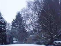 Árboles de hoja perenne y árboles disidious en nieve del invierno imágenes de archivo libres de regalías