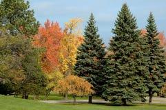 Árboles de hoja perenne y follaje de caída Fotografía de archivo libre de regalías