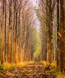 Árboles de hojas caducas imagen de archivo
