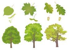 Árboles de hojas caducas fotografía de archivo