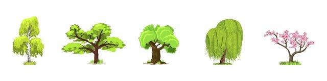 Árboles de hojas caducas en cuatro estaciones - primavera, verano, otoño, invierno Naturaleza y ecología Ilustración verde del ve stock de ilustración