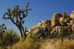 Árboles de Joshua y formaciones de roca Foto de archivo