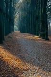 Árboles de la avenida en otoño Imágenes de archivo libres de regalías