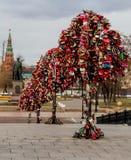 Árboles de la boda Imagen de archivo libre de regalías