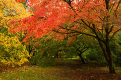Árboles de la caída foto de archivo