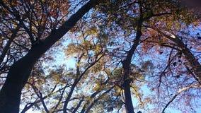 Árboles de la caída Imagenes de archivo