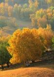Árboles de la caída Fotografía de archivo