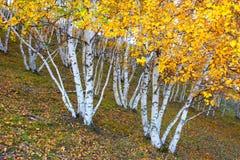 Árboles de la caída Fotografía de archivo libre de regalías