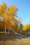 Árboles de la caída Imagen de archivo